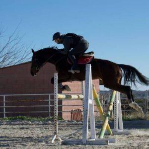 Salto de Obstáculos Rosper
